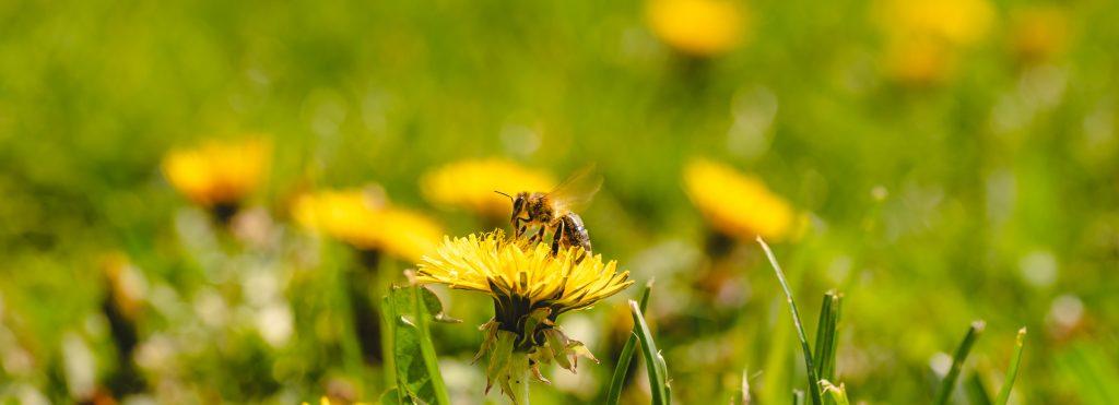 Interessant ist, dass die von Bienen erzeugten Wechselmagnetfelder mit einer Modulation zwischen 180Hz bis 250Hz im Bereich der Pulsrate von GSM Mobilfunk (217Hz) liegen.