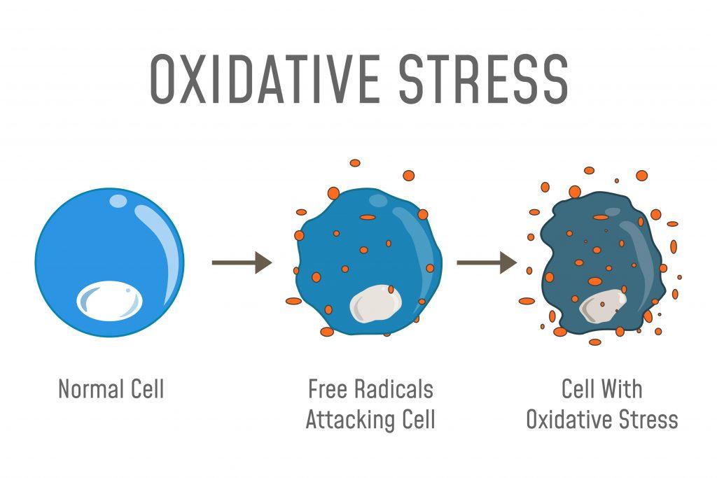 Freie Radikale konnen oxidativer Zellstress auslösen. Dieser Stress für die Zellen führt dazu, dass die DNA dieser Zellen irreparabel verletzt oder zerstört werden kann.